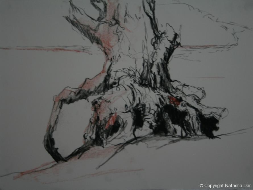 River-Gum-1-charcoal-38x28-cm