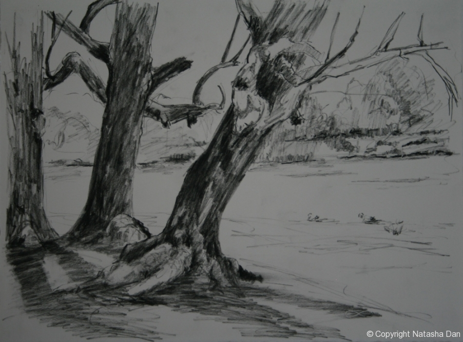 River-Gums-Apex-Park-charcoal-38x28-cm