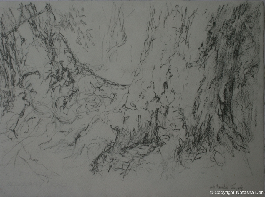 Wolumbin-Tangle-charcoal-38x28-cm